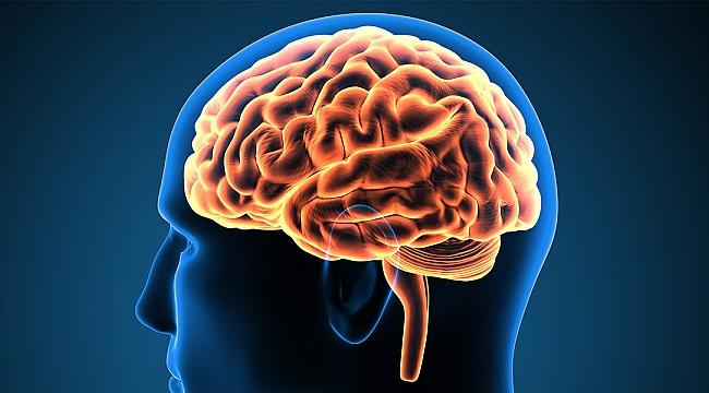 Beyin hastalıkları ilacını Türkiye'de bulacak
