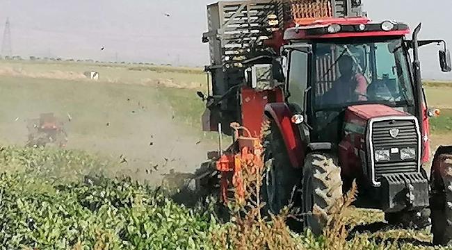 Kayısı diyarında şeker pancarı hasadı başladı